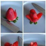 Belle's strawberry rose